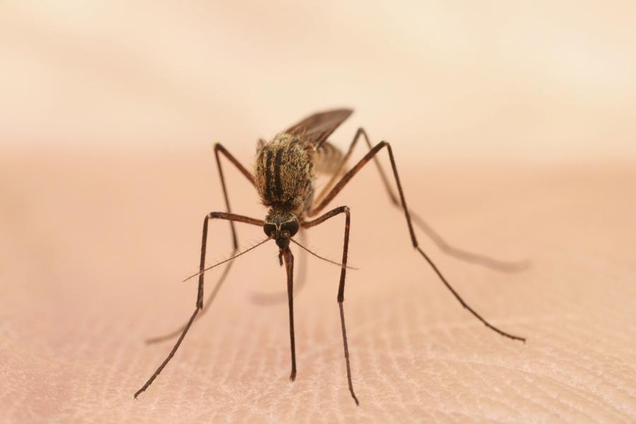 Что не любят комары народные средства