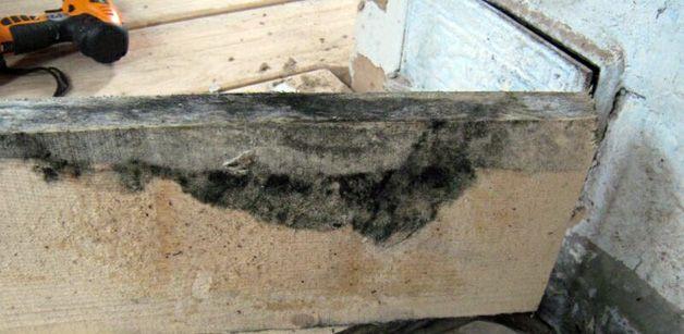 Грибок на древесине как избавиться