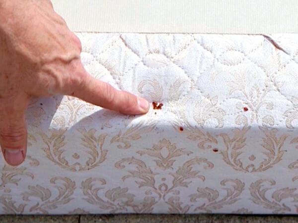 Пахнут ли домашние клопы если их раздавить
