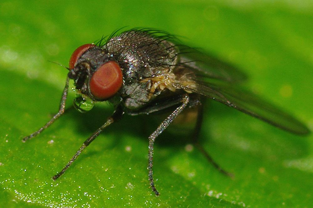 наличие паразитов в организме симптомы лечение