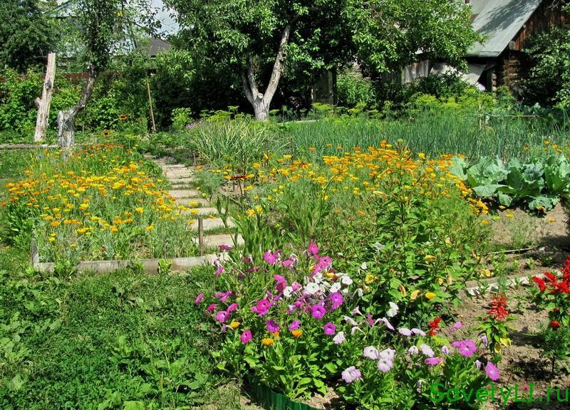 цветы против вредителей сада и огорода